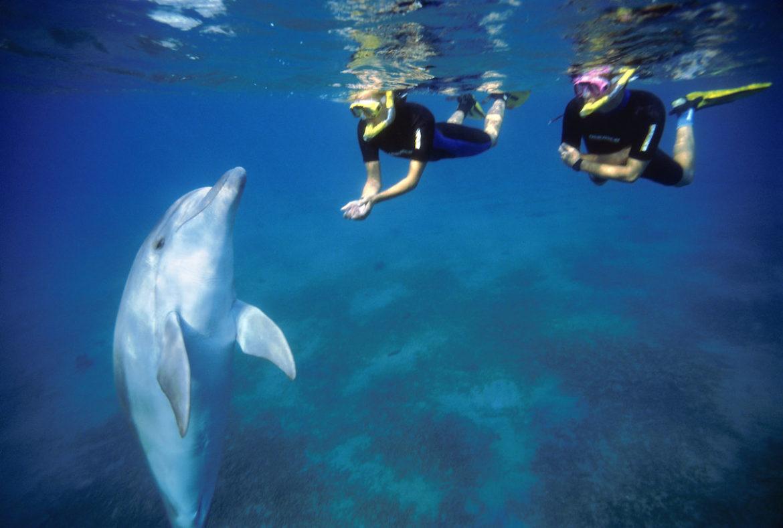 Schwimmen mit Delfinen in Eilat, Staatliches Israelisches Verkehrsbüro