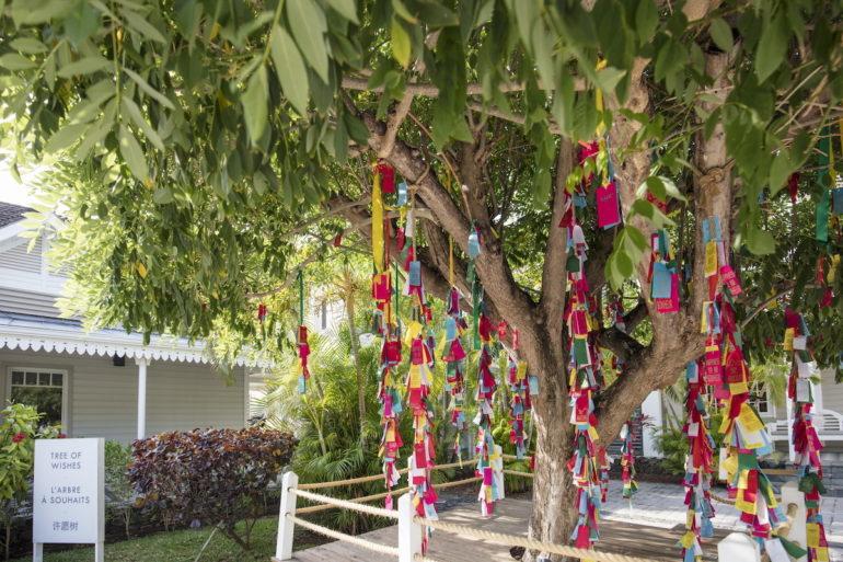 LUX* Tree of wishes Saint Gilles, La Réunion